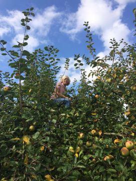 Zoon Boudewijn plukt graag mee, lekker de boom in!
